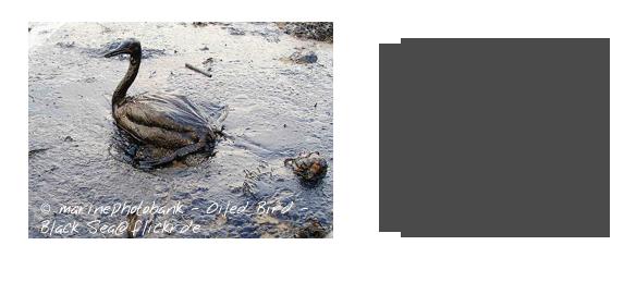 Millionen toter Fische und Meeresvoegel sind die Folgen fuer Natur und Umwelt