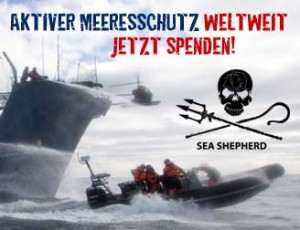Sea Shepherd - aktiver Meerschutz